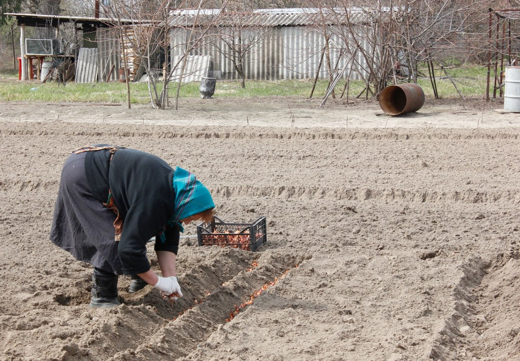 Matrjona sowing onions